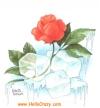 rosa fresca...