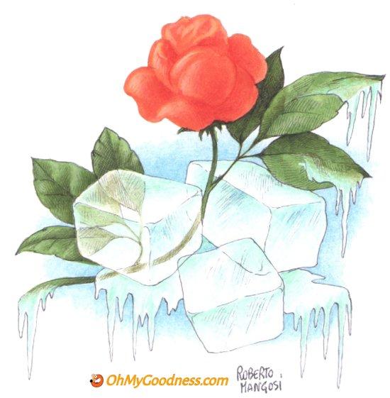 : Refreshing Love